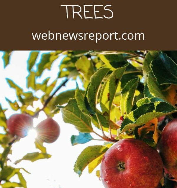 A Comprehensive Guide to Get Started Planting Your Own Fruit Trees
