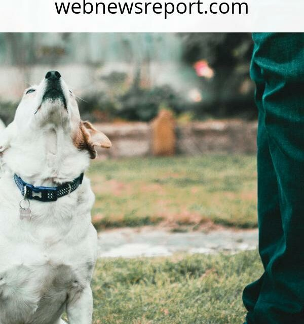 Start Walking With Your Dog: Here's Why