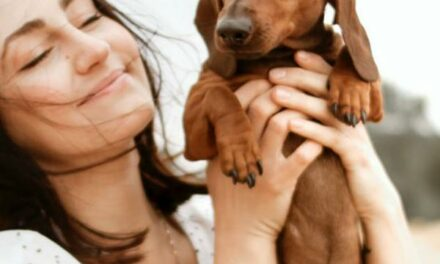 Your Essential Guide for Dog Training Aids