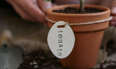 Want to Start Gardening? Follow These Practical Tips!