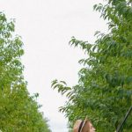 Benefits of Buying the Right Tools for Your Garden Care